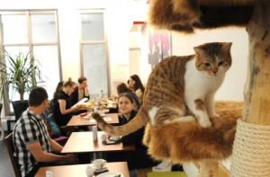 Katze im Cafe