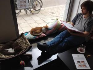 Katzen und Mensch