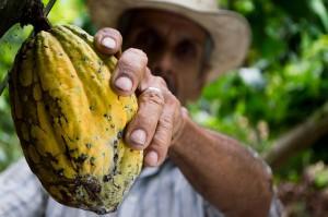 Kakaobauer Kolumbien